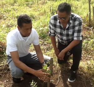 Kinito Méndez observa mientras el ing. Joselito Herrera explica el sistema de plantación (2)