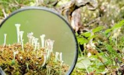 bosque_0
